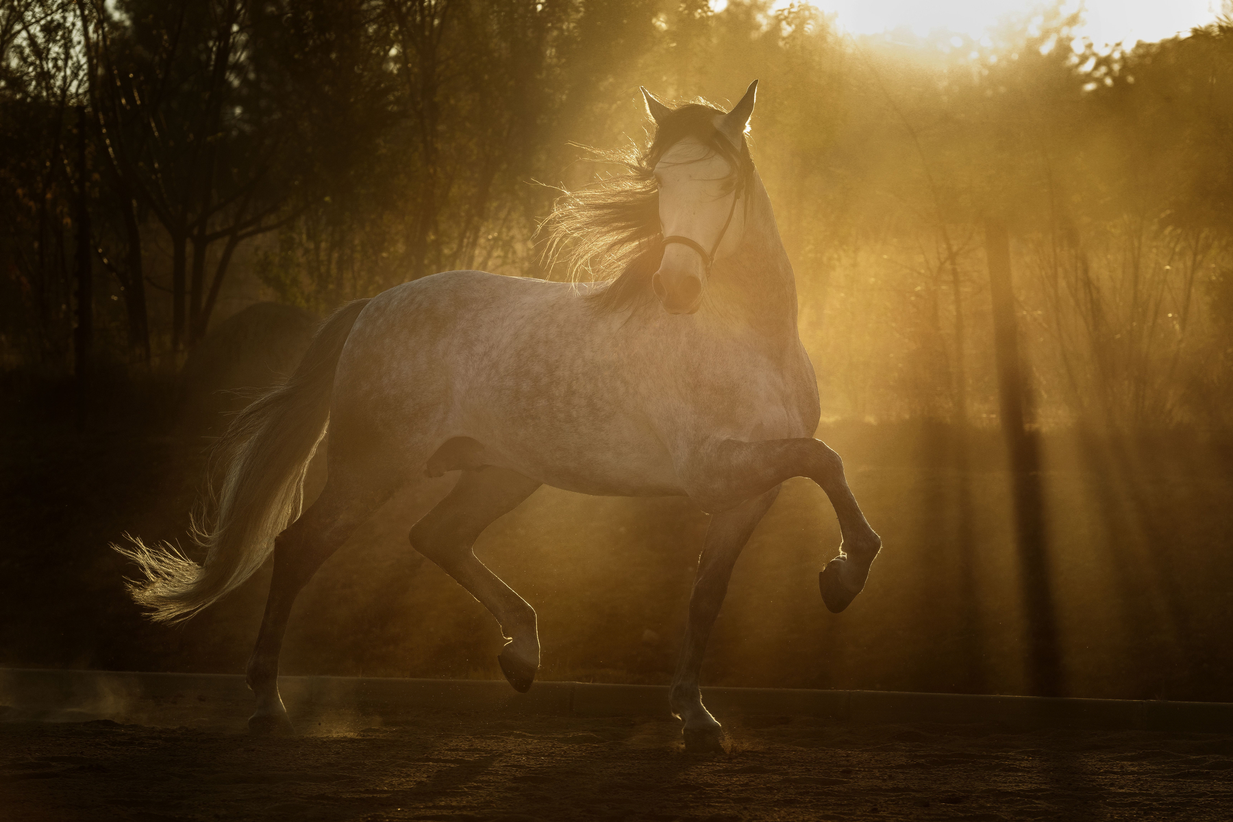 Photographer-equine-business-lifestyle